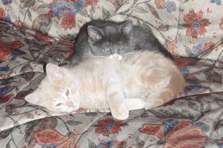 Leone (rosso) e Diana (grigia)